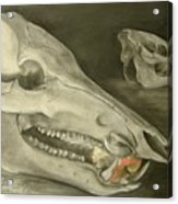 Bone Appetit Acrylic Print