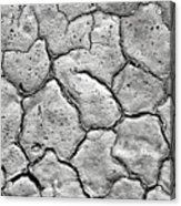 Bone Dry  Acrylic Print