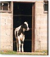 Bonjour Mon Ami - Photograph Acrylic Print