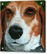 Bonnie - Beagle Painting Acrylic Print