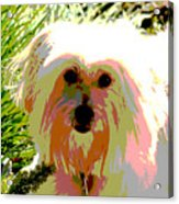 Bonnie In Color Acrylic Print
