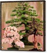 Bonsai Garden Acrylic Print