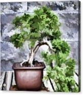 Bonsai  Acrylic Print