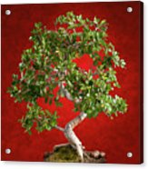 Bonsai Tree Acrylic Print