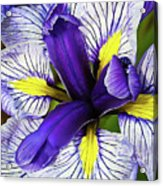 Boothbay Beauty Acrylic Print