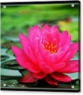 Bordered Water Lily Acrylic Print