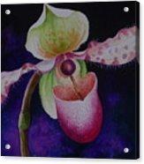 Borneo Orchid P Chiquita Acrylic Print