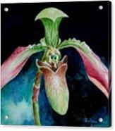 Borneo Slipper Orchid Acrylic Print