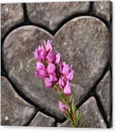 Boronia Love Acrylic Print