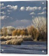 Bosque Del Apache 1 Acrylic Print
