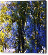 Bosque Glow And Chantilly Snow Acrylic Print