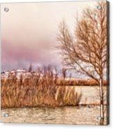Bosque Winter II Acrylic Print