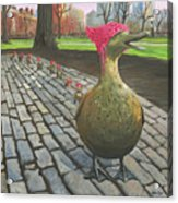 Boston Ducklings Getting Their Pink On Acrylic Print