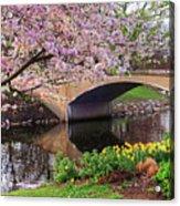Boston Ma Spring Tree On The Charles River Esplanade Boston Ma Acrylic Print