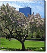 Boston Public Garden Spring Tree Boston Ma Acrylic Print