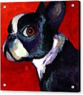 Boston Terrier Dog Portrait 2 Acrylic Print by Svetlana Novikova