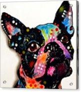 Boston Terrier II Acrylic Print by Dean Russo