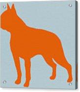 Boston Terrier Orange Acrylic Print