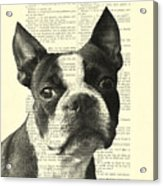 Boston Terrier Portrait In Black And White Acrylic Print