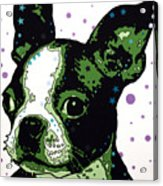 Boston Terrier Puppy Acrylic Print by Dean Russo