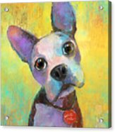 Boston Terrier Puppy Dog Painting Print Acrylic Print