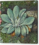 Botanical Acrylic Print