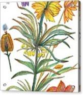 Botanical Flower-53  yellow flower Acrylic Print