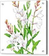 Botanical Illustration Floral Painting Acrylic Print