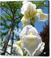Botanical Landscape Trees Blue Sky White Irises Iris Flowers Acrylic Print