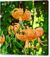 Botanical Master Gardens Art Prints Orange Tiger Lilies Baslee Troutman Acrylic Print