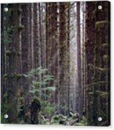 Botanical Reincarnation Acrylic Print