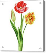 Botanical Tulip Bouquet Watercolor Acrylic Print