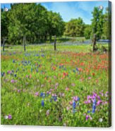 Botanical Variety Show In The Texas Hill Country Acrylic Print