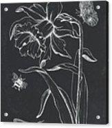Botanique 2 Acrylic Print