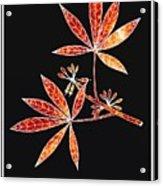Botany 1 Acrylic Print
