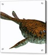 Bothriolepis Fish On White Acrylic Print