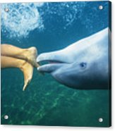 Bottlenose Dolphin Acrylic Print