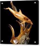 Bottlenose Dolphin Acrylic Print by Kjell Vistnes