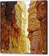 Bottom Of Wall Street On Navajo Trail In  Bryce Canyon National Park, Utah  Acrylic Print