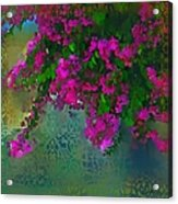Bougainville Delight Acrylic Print by Seema Sayyidah