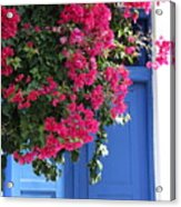 Bougainvillea And Blue Acrylic Print