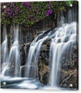Bougainvillea Blooms Above Wailea Falls.  Acrylic Print