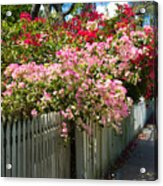 Bougainvillea In Old Eau Gallie Florida Acrylic Print
