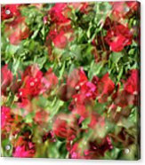 Bougainvillea Repeating Pattern Abstract I Acrylic Print
