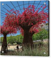 Bougainvilleas Tree Scultures Acrylic Print
