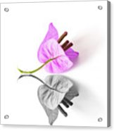 Bouganvillea Reflection Acrylic Print