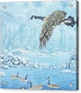 Boulder Bay Geese Acrylic Print