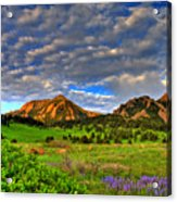Boulder Spring Wildflowers Acrylic Print