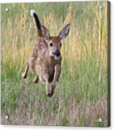 Bounding Bambi Acrylic Print