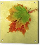Bouquet De Feuilles / Bunch Of Leaves Acrylic Print
